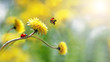 Two ladybugs on a yellow spring flower. Flight of an insect. Artistic macro image. Concept spring summer. Free space.