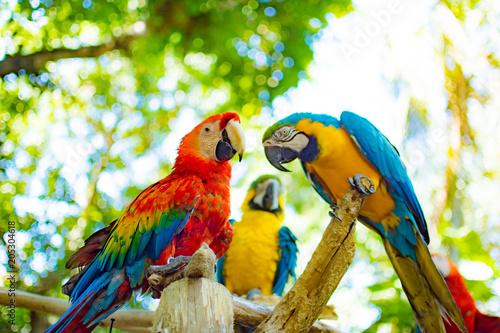 Aluminium Papegaai Birds from Colombia