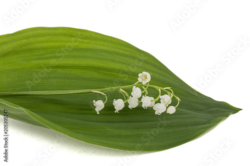 Aluminium Lelietjes van dalen White flower of lily of the valley, lat. Convallaria majalis, isolated on white