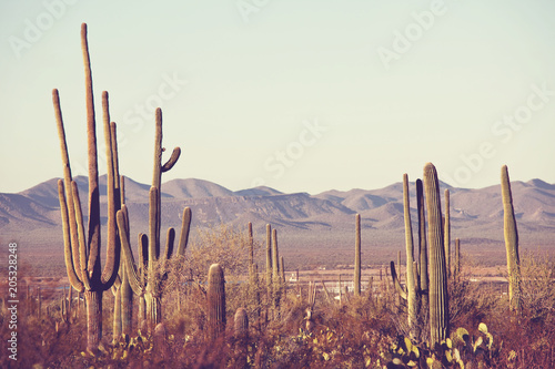 Plexiglas Galyna A. Cactus