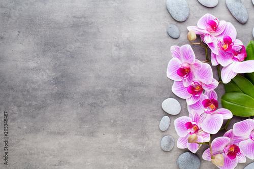 Fototapeta Beauty orchid on a gray background. Spa scene.