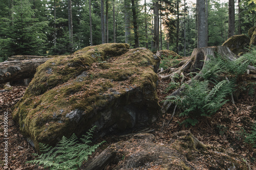 Aluminium Khaki Forest scenery. Natural landscape. Wilderness.