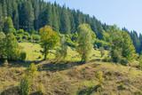 Village landscape with fence on green hills