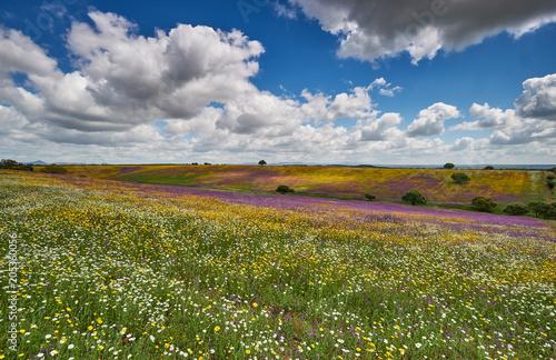 Plexiglas Honing Spring picnic of fresh white daisies, lavender, multifloral natural panoramic landscape