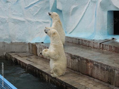 Aluminium Ijsbeer белые медведи