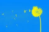 wind blows away blowball seeds