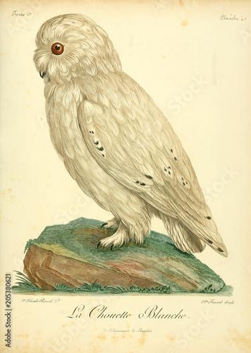 Fotobehang Uilen cartoon Illustration of bird.