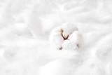 Fluffy white cotton flower - 205398210