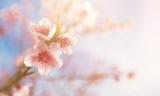 Spring.