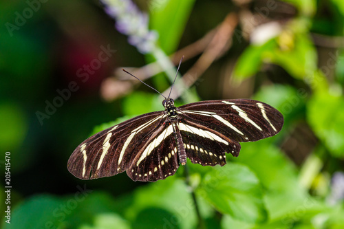 Plexiglas Vlinder Butterfly