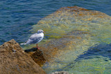 Background with Seagull on water - 205422494