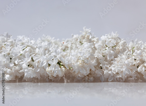 Foto Murales Blossomed white lilac on a white background
