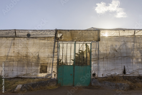 cultivos de platanos abandonados en canarias