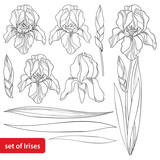 Vector set with outline Iris flower head, bud and ornate leaves in black isolated on white. Drawing of perennial blooming plant Iris in contour style for spring or summer design and coloring book.