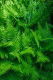 Tropical leaves. Floral design background. - 205474824