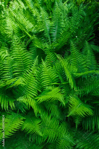 Fototapeta Tropical leaves. Floral design background.