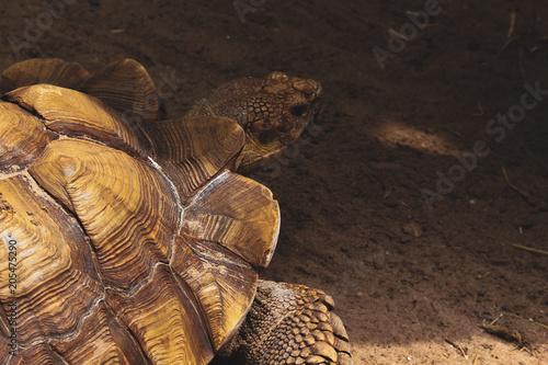 Aluminium Schildpad The Turtle