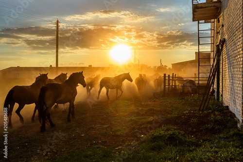 a herd of horses running on the sunset background