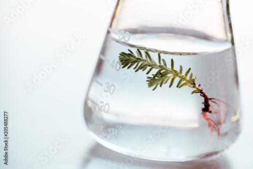 Foto Murales flask for bio research