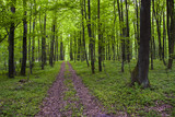 Road through the green forest in spring