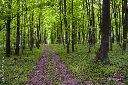 Plexiglas Lente Road through the green forest in spring