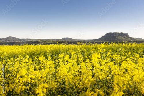 Fototapeta Landschaft in der Sächsischen Schweiz, Lilienstein