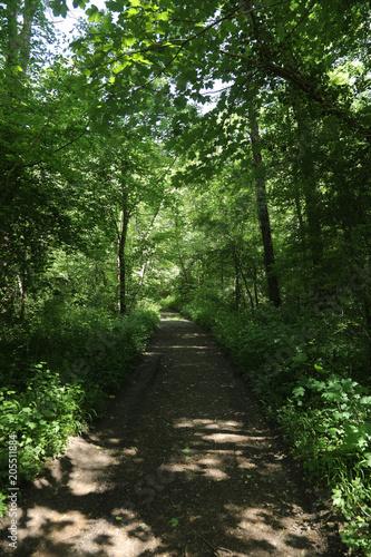 Aluminium Weg in bos chemin