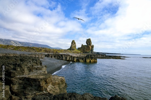 Foto Murales Coast Iceland with Black Sand Beach and Seagull