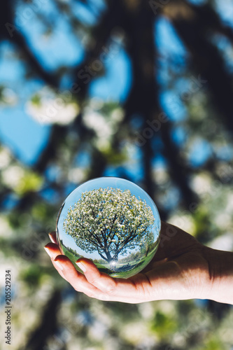 A tree and bright blue sky reflection in a ball - 205529234
