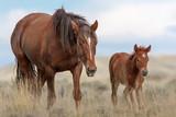 Wild Mustangs - 205533228