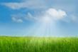 canvas print picture - Sonnenstrahlen durchbrechen Sommerwolken und bringen das saftige Gras auf einer grünen Wiese zum Leuchten