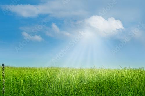 canvas print picture Sonnenstrahlen durchbrechen Sommerwolken und bringen das saftige Gras auf einer grünen Wiese zum Leuchten