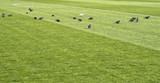 close up of soccer field grass - 205560875