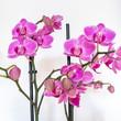 Viele Orchideen auf weiss