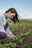 Agronomist inspecting sunflower field