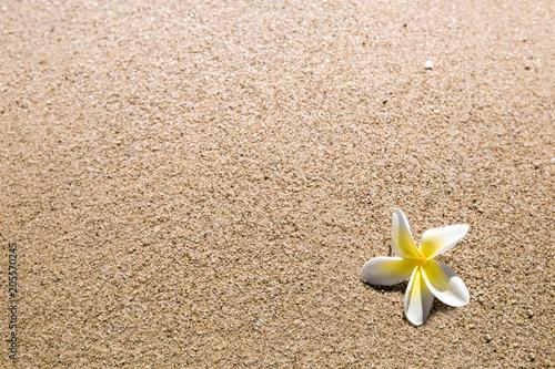 Canvas Zen Stenen white flower on sand beach