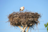 a stork lying in the incubator, a stork lying in the nest,