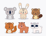 icon set of cute animals over white background, colorful design. vector illustration