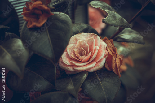English Roses - 205587685