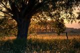 Wiosenne pylenie drzew i roślin - 205608000