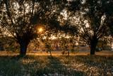 Wiosenne pylenie drzew i roślin - 205608026