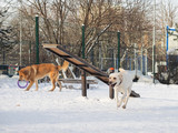Large dogs playing at Playground for dogs - 205617016