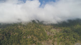 Aerial view of mountains covered forest, trees in clouds and fog. Cordillera region. Luzon, Philippines. Slopes of mountains with evergreen vegetation. Mountainous tropical landscape.