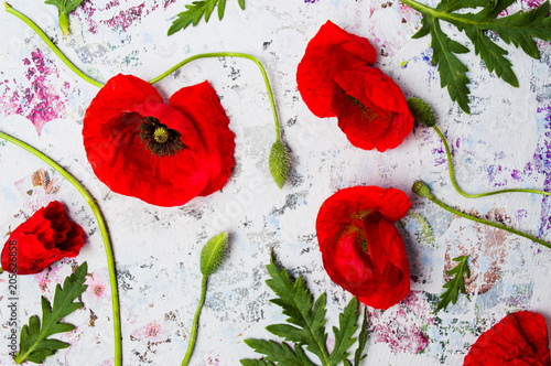 Fototapeta Poppy flowers arrangement on colored background