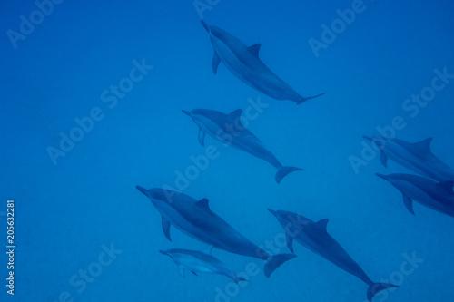 Aluminium Dolfijn dolphins