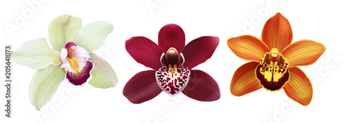 Tropical Orchid Cymbidium flowers.