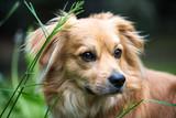 hübscher Hund - 205646219