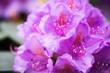 Leinwanddruck Bild - schöne Blüten