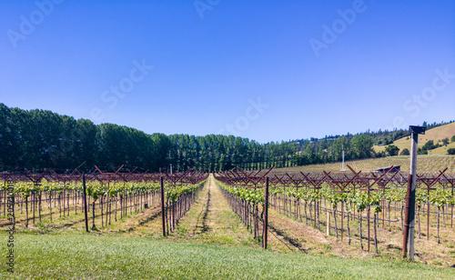 Plexiglas Pistache Vineyard 2