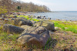 Quadro Beautiful coastline during spring. Rocks fresh grass and trees. In the city Borgholm at Oland, Sweden